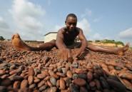 Côte d'Ivoire: 2014, année de tous les records pour l'agriculture