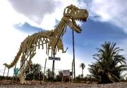 Maroc: les fossiles d'Erfoud, un trésor préhistorique en danger