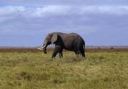 Deux éléphants sèment la terreur au Malawi: 7 morts