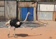 Au Soudan du Sud, la faune massacrée par les belligérants