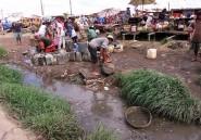 Madagascar: apparition de la peste et mobilisation de l'OMS