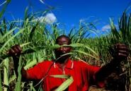 Madagascar: 2 morts après des troubles dans une sucrerie gérée par des Chinois