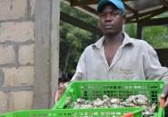 """Des huîtres """"made in"""" Gabon pour Noël"""