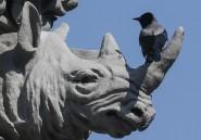 Un chasseur américain abat un rhinocéros noir qu'il avait gagné le droit de tuer aux enchères