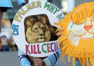 «Si j'avais su que le lion était Cecil, je ne l'aurais pas tué»