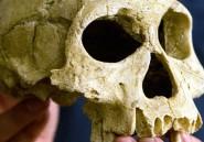 Pourquoi la nouvelle espèce humaine découverte se nomme Homo naledi?