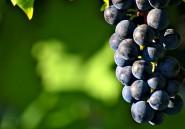 Le clos des Baobabs: à la découverte d'un vin rouge 100% sénégalais