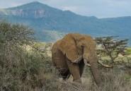 En Afrique, le crime organisé décime les éléphants