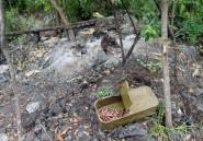 RDC: les rebelles hutus rwandais fuient l'offensive de l'armée dans les Kivus