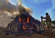 Kenya: le président brûle 15 tonnes d'ivoire