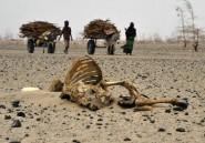 Climat: des ONG africaines appellent