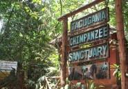 Au Sierra Leone, la réouverture d'une réserve des chimpanzés annonce la fin d'Ebola