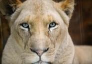 Afrique du sud: le guide de la jeune Américaine tuée par un lion se défend
