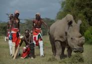 Kenya: un tournoi de cricket pour une espèce de rhinocéros vouée