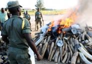 Mozambique: incinération massive de cornes de rhinocéros, première mondiale
