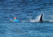Surf, requin et caméras, un drame évité en Afrique du Sud