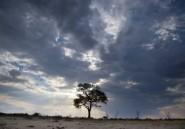 Rumeurs sur la mort d'un autre lion du parc zimbabwéen de Hwange