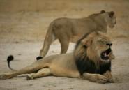 Cecil le lion: le procès de l'organisateur du safari au Zimbabwe reporté