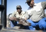 Afrique du Sud: les fermiers noirs veulent bousculer les préjugés raciaux
