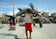 Somalie: la pêche étrangère illégale menace les stocks et risque de relancer la piraterie