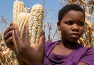 Au Zimbabwe, la sécheresse contraint des villageois
