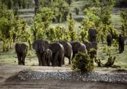 Zimbabwe: 14 éléphants morts empoisonnés dont 11 au parc national de Hwange