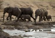 Zimbabwe: 22 éléphants empoisonnés près du parc de Hwange