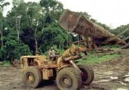 Gabon: des hauts fonctionnaires interpellés dans une affaire de trafic de bois précieux