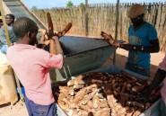 Au Mozambique, de grands groupes agricoles ne font qu'une bouchée des petits fermiers