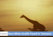 En Tanzanie, une girafe ressemble étrangement à David Bowie
