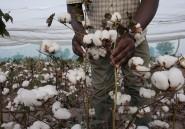 Les cultures OGM ne sont pas forcément le futur de l'Afrique, voici pourquoi
