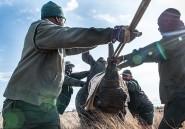 Dans les parcs sud-africains, la guerre anti-braconnage a des relents d'apartheid