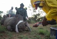 Une armée privée à la réputation sulfureuse défend les rhinos en Afrique du Sud