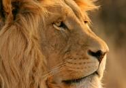 L'histoire de la fausse image d'un pasteur attaqué par des lions en pleine prière