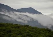 Il faut sauver les forêts éthiopiennes pour continuer à boire du café