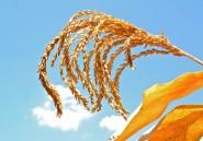 L'Afrique doit développer une agriculture maîtrisée pour booster sa croissance