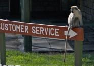 Le Kenya a été privé d'électricité pendant quatre heures à cause d'un singe