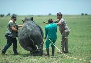 Au Zimbabwe, des braconniers appartiennent à la police secrète