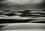 Les oasis pourraient bientôt n'être plus qu'un mirage dans le Sahara
