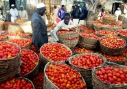 Au Nigeria, des tomates pour lutter contre le chômage