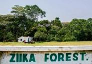 Zika : la soudaine notoriété de la forêt d'Ouganda où le virus a été découvert