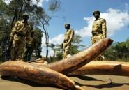 Afrique: le trafic d'ivoire très concentré et contrôlé par quelques barons
