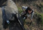 RDCongo: entre rébellions et forces armées les éléphants ont beaucoup d'ennemis