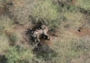 Soudan du Sud: la faune sauvage, victime collatérale de la guerre civile