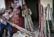 Les derniers éléphants du Nigeria menacés par les braconniers
