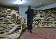 Kenya: amnistie sur l'ivoire avant une grande cérémonie de crémation