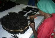 A Madagascar, le prix de la vanille flambe, sa qualité se dégrade