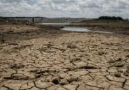 Sécheresse: l'ONU s'inquiète de la situation alimentaire au Zimbabwe