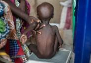 """Nigeria: urgence """"extrême"""" contre la famine dans le nord-est"""