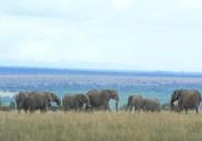 """Kenya: un """"baron"""" du trafic d'ivoire condamné"""